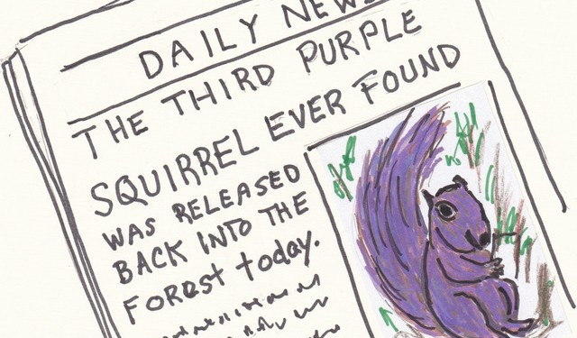 You are currently viewing The Purple Squirrel Dilemma